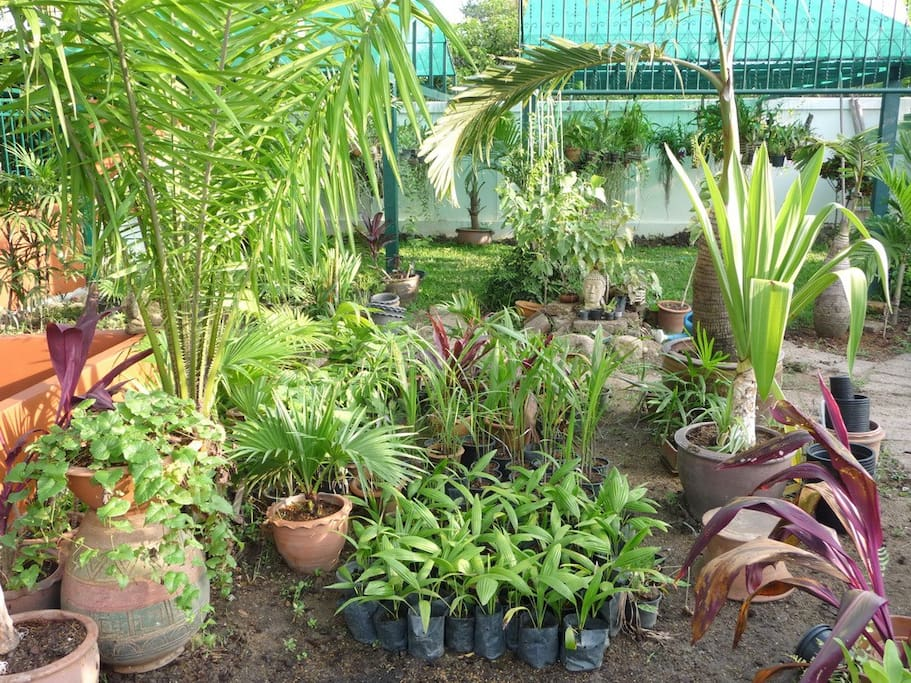 many plants wait for repotting in our big garden with veggies, herbs, orchids and palms