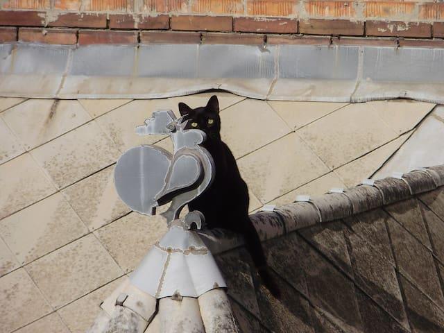 Banderuola e il gatto nero