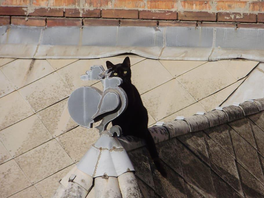 Il gatto che porta fortuna e la banderuola.