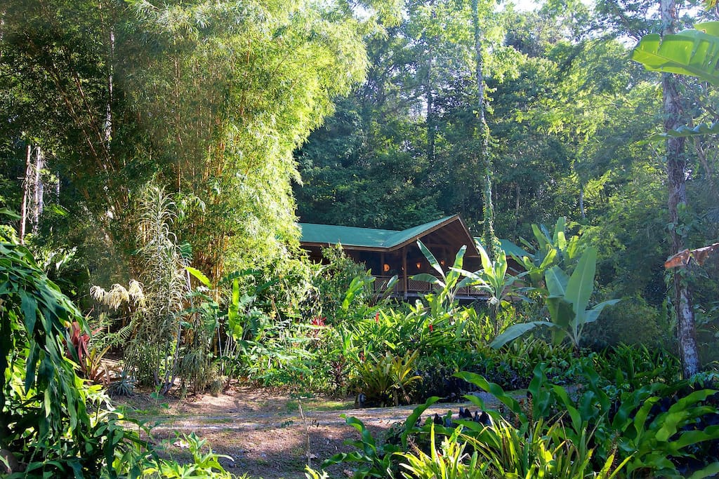 Surround yourself with nature at Casa Bromelia, yet be only minutes from beaches and all amenities.