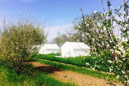 Modern Farmstay- Tent #4 - Cedar Creek