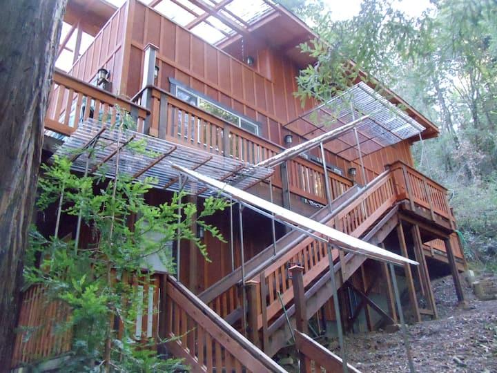 "The ""Bird's Nest"" in the Redwoods"