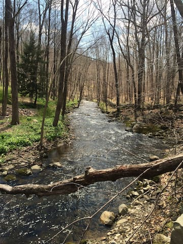 Little River Trail in Spring.