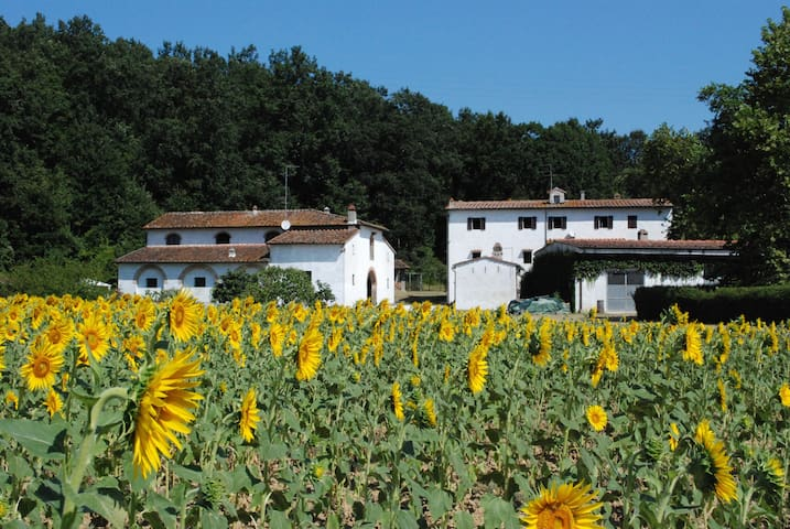 "Holiday home in Tuscany 1 "" Paduletta"" - Calcinaia"