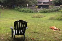 Meditation Chair on the hill overlooking vegetable garden.