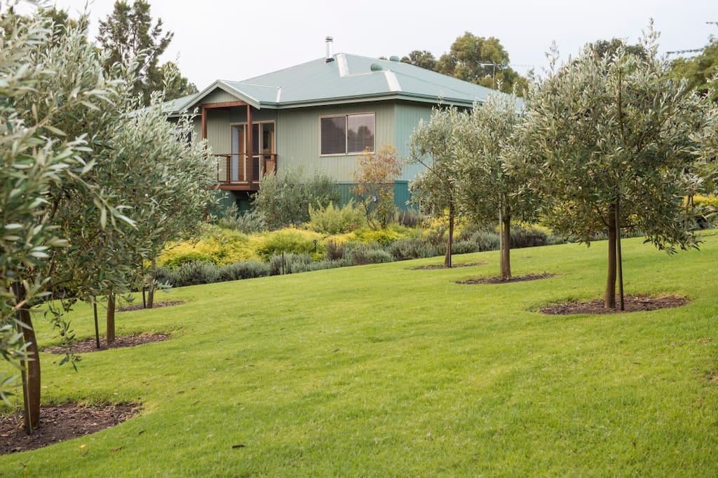 Main house surrounded by olive trees