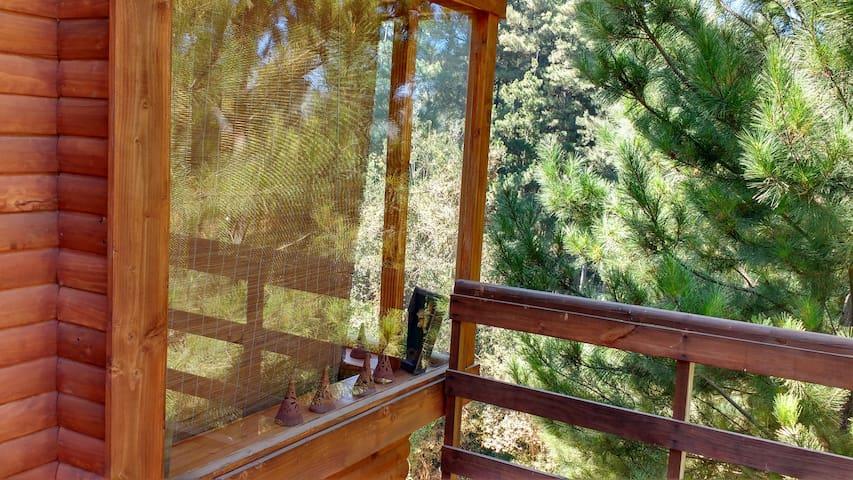 Vichuquen, cbñas insertas Bosque vista al lago
