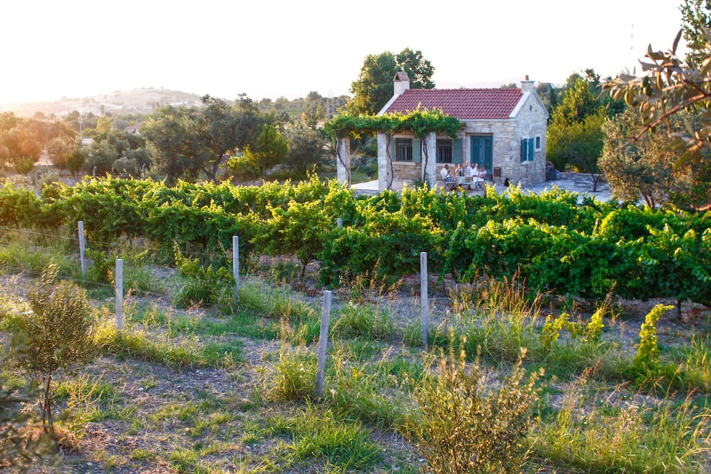 Grapevines, olive trees and the cottage