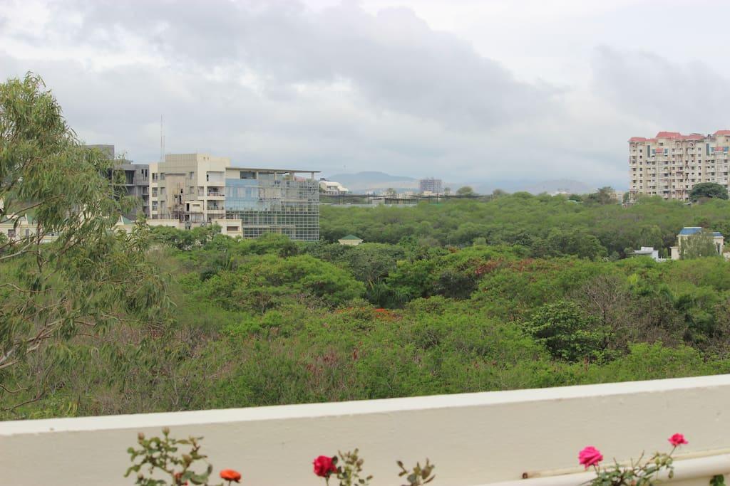 Greenery overlooking Terrace