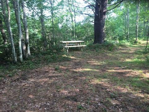 Primitive Camping: roadside woodland