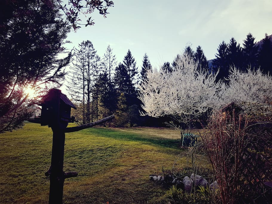 Spring coming to town