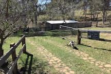 Enclosed yard for your dog and 3 acre paddock for horses.