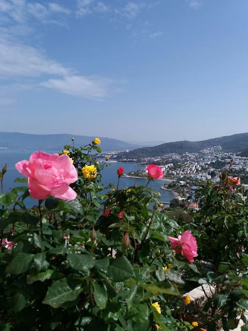 Gulluk means ROSES TOWN. WIEV OUR HILL
