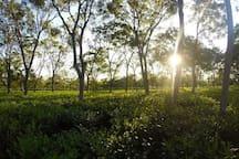 Sunset @ Sapoi