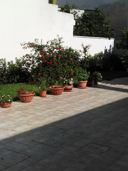 Esterno giardino