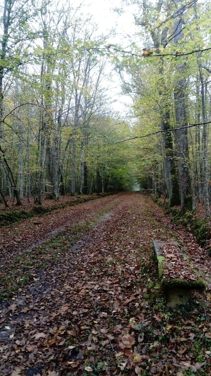 Forêt  : lieu d'étude et de créativité