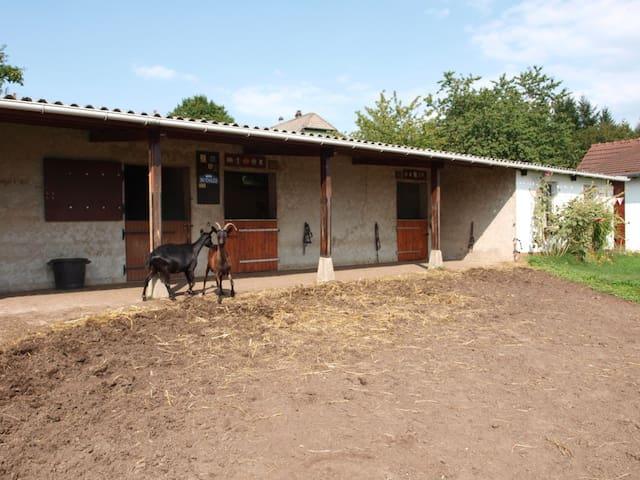 Gîte d'étape du Vasenberg - Siersthal - 自然小屋
