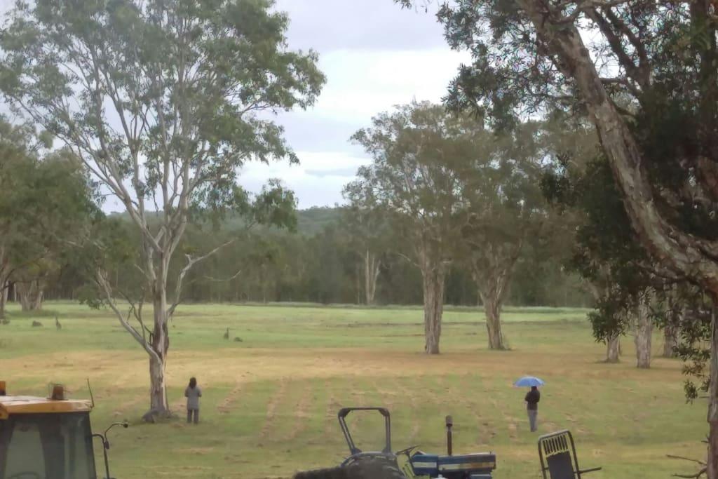 Guests watching the kangaroos