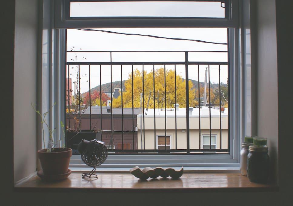 Automne, vue sur le Mont-royal