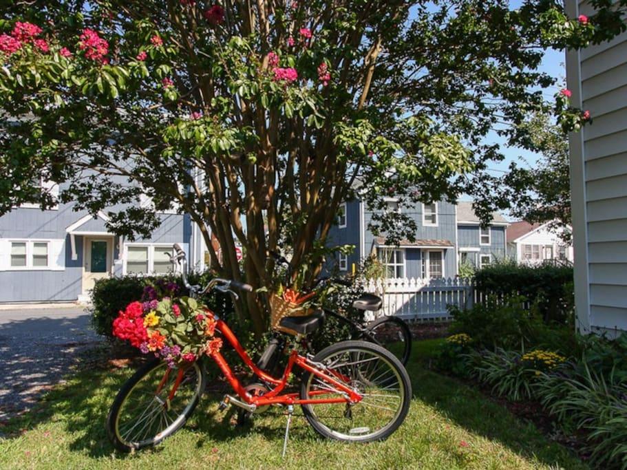 Rent Townie Bikes