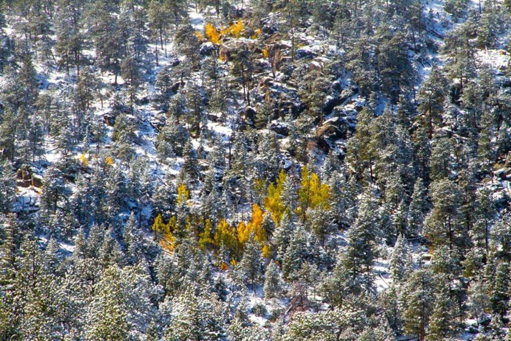 Aspen gold in early fall.