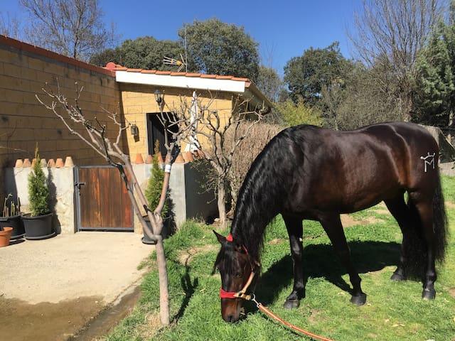 La Casita del Palafrenero - experiencia rural 100% - Navaluenga - House
