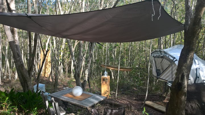 Dambala - Bulle dans les arbres