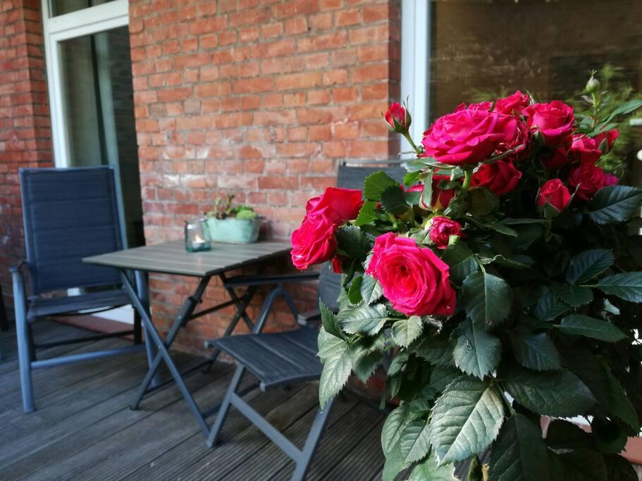 """Rote Rosen überall in Lüneburg! Auch auf der Terrasse der Ferienwohnung """"Stadtgärtchen""""."""