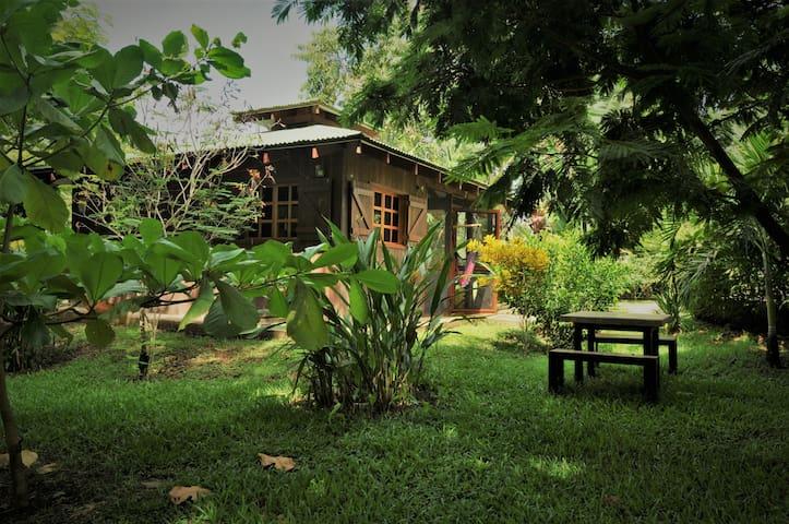 maison sous les arbres,#3