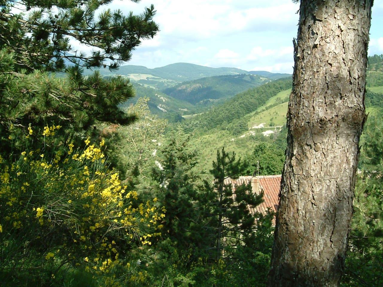 Chi Paolotti, an Italian estate