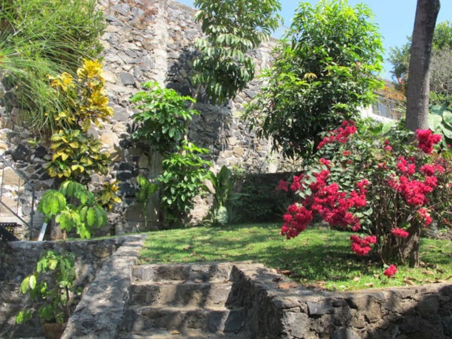 View of lovely back garden with fruit trees and flowers.