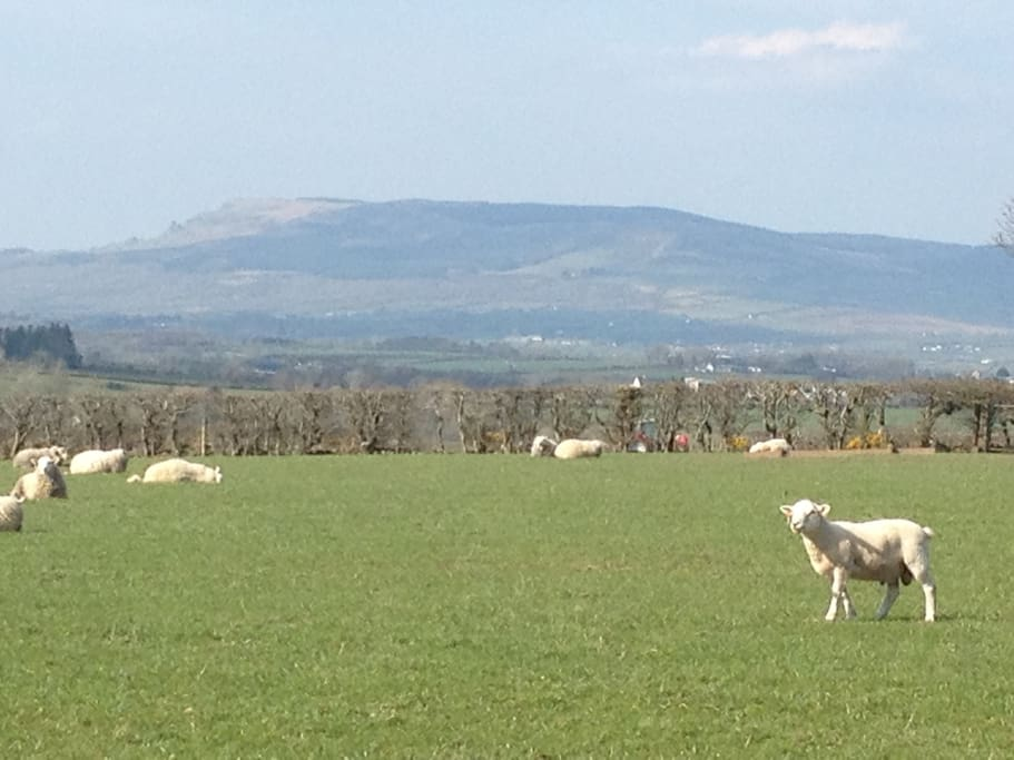 Stunning Views of the Sperrin Mountains with the Donegal Hills in the distance