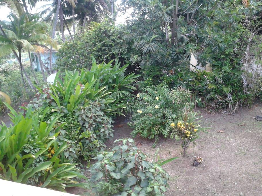 Coin jardin pour une détente et bain de soleil garanti