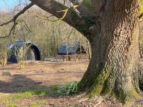 A glamping pod nestled in woods in the South Downs