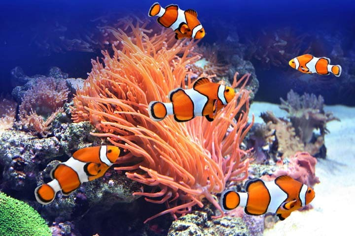 Feeding the clown fish while snorkeling along the sanctuary at Alona beach........