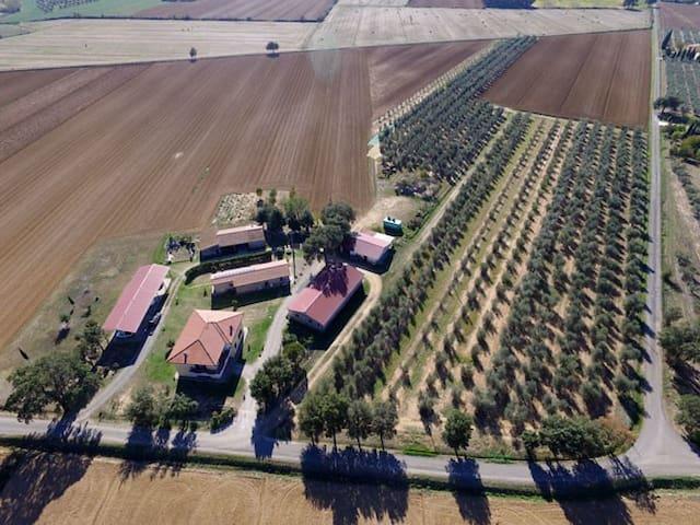 Agriturismo  Le Sughere