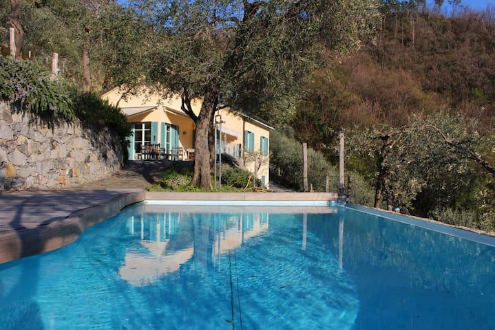 Villa, pool, seaview in olive grove - Moneglia - Villa