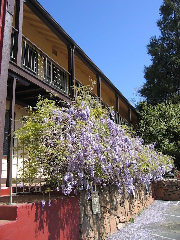 The Arbor Suite Studio, Yosemite