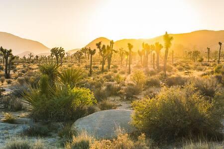 The Desert Room in Sunny San Diego