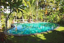 Your pool surrounded by coconut trees! Just jump and refresh!