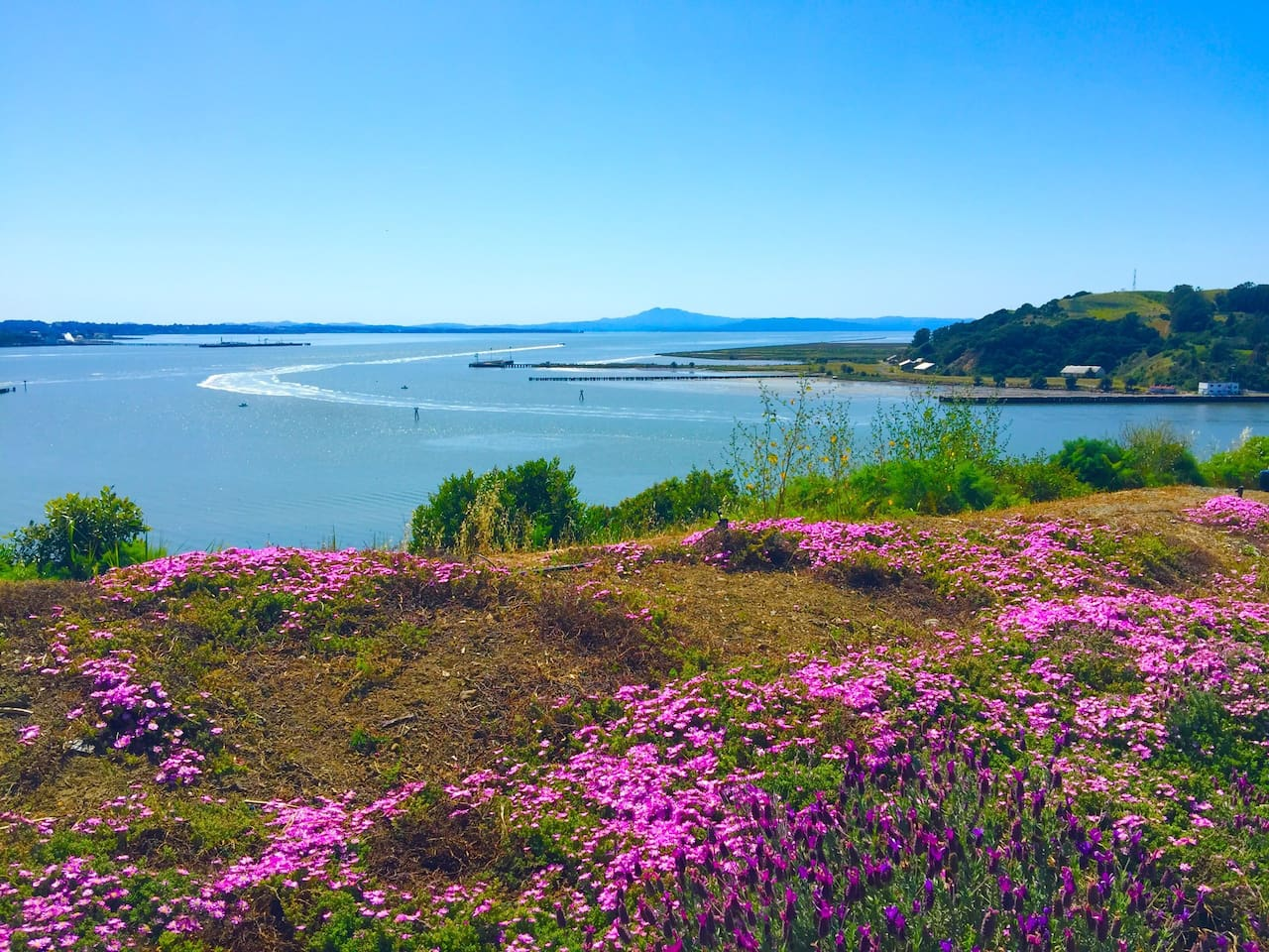 Walking distance to vista point of San Pablo bay ( note: you have to walk one minute to see the view. It's not the view from your window)