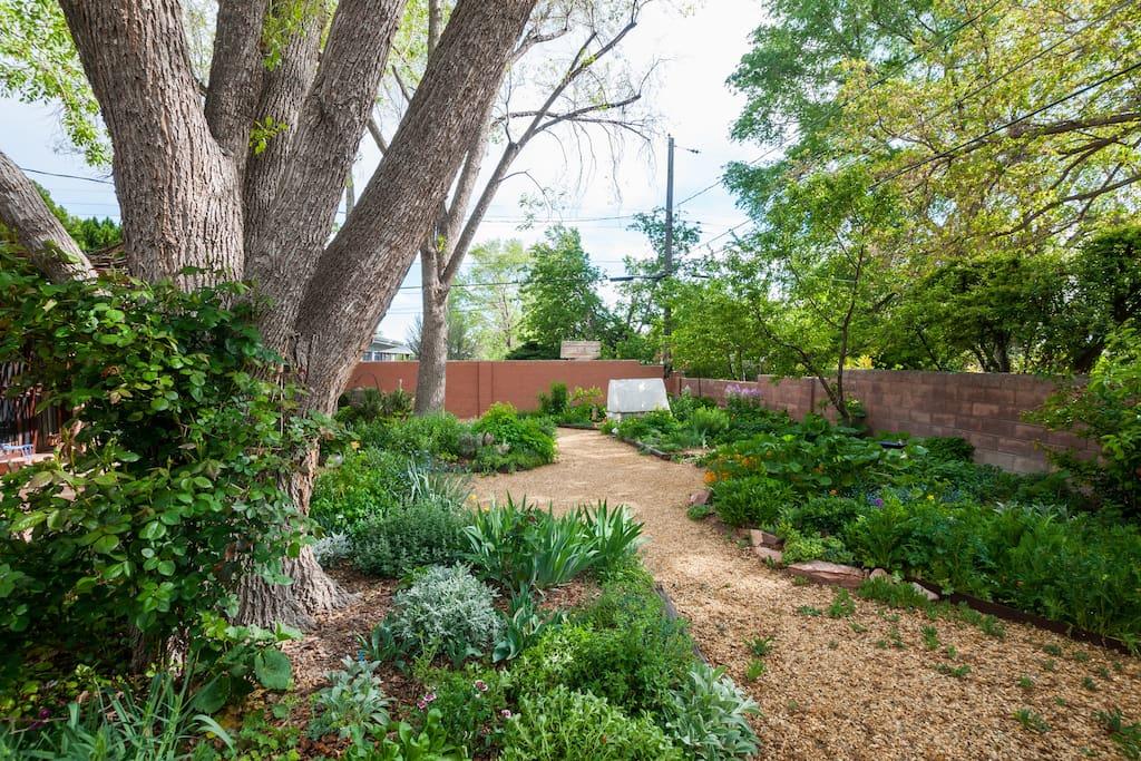 Lovely adobe house and garden.
