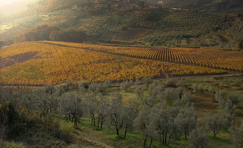 Among the wine yards of Tuscany - Montalbiolo - Lejlighed