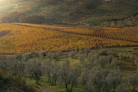 Among the wine yards of Tuscany - Montalbiolo - 公寓