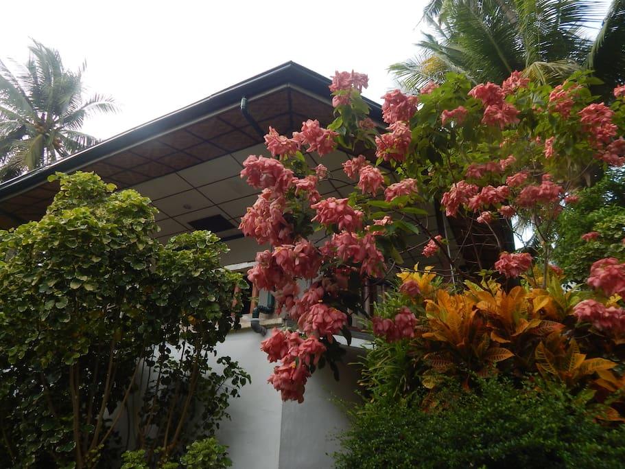 """Guesthouse """"Flower Garden"""""""