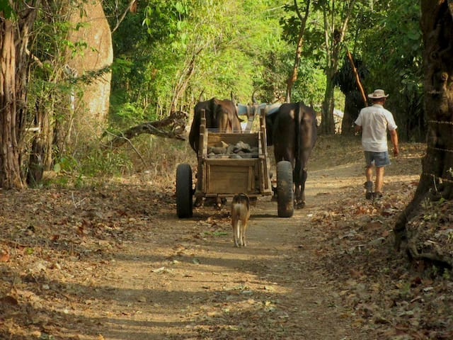 Jungle Hideaway and Karen Mogensen Nature Reserve