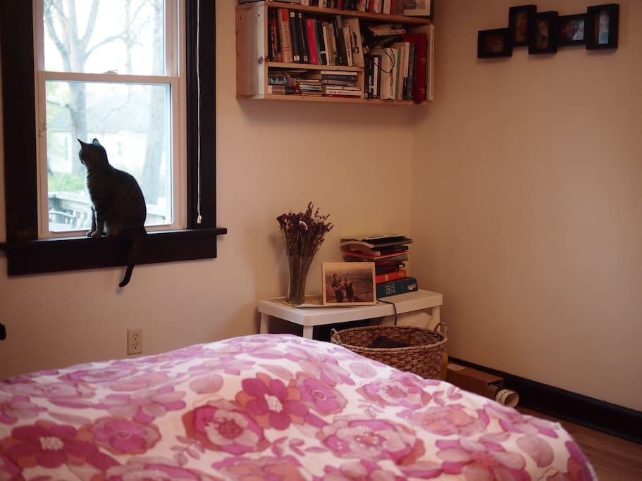 Bedroom and a cat