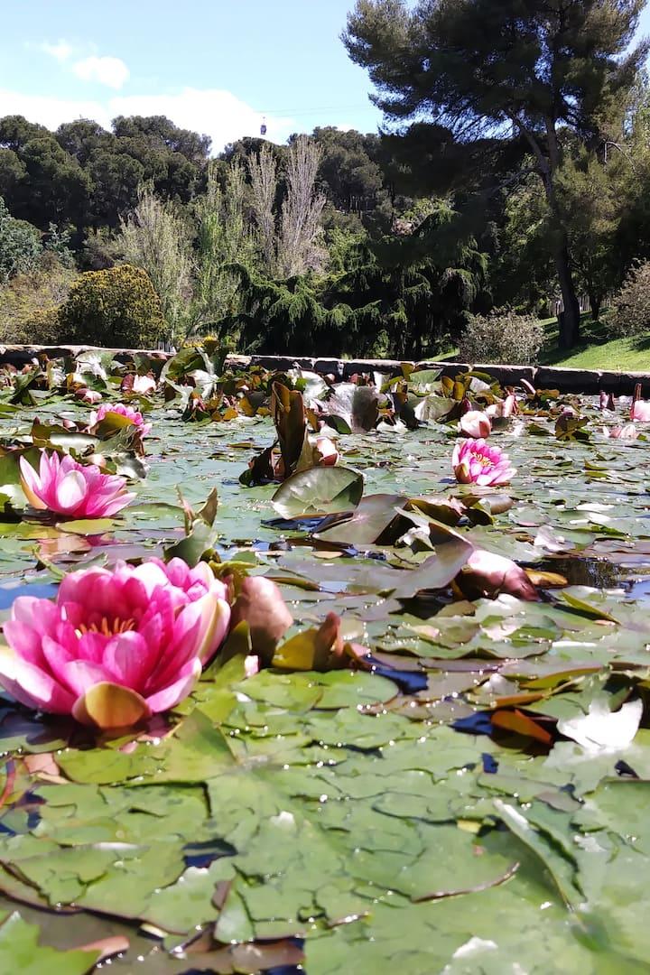 Montjuic Gardens