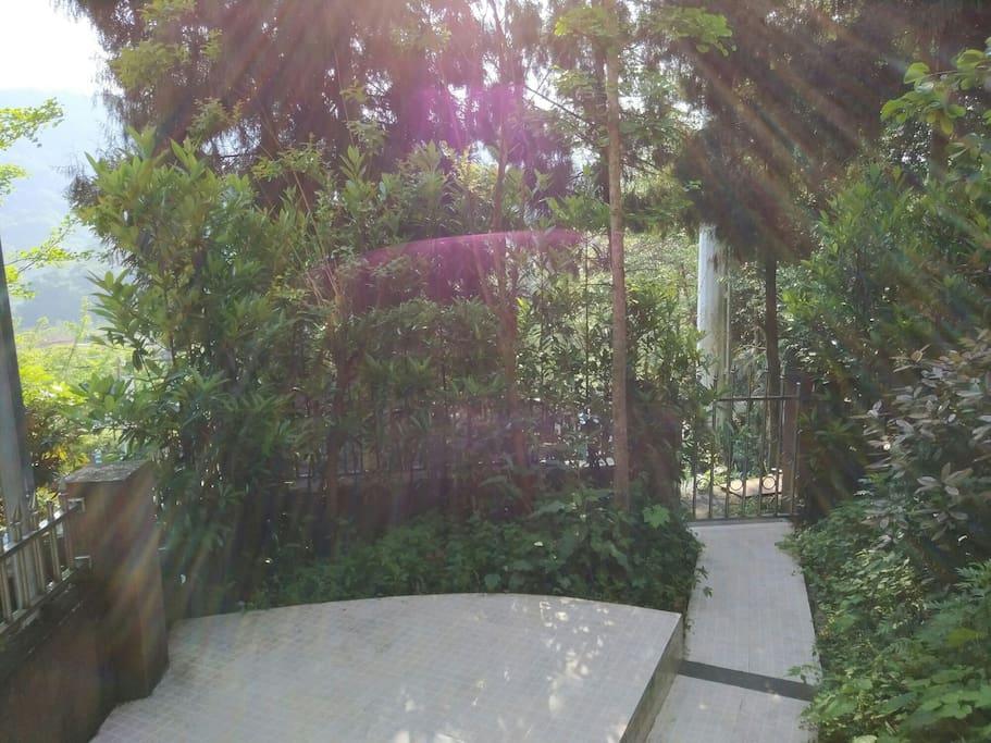 阳光明媚上午,坐在一楼花园里看书,发呆~~ヾ(Ő∀Ő๑)ノ