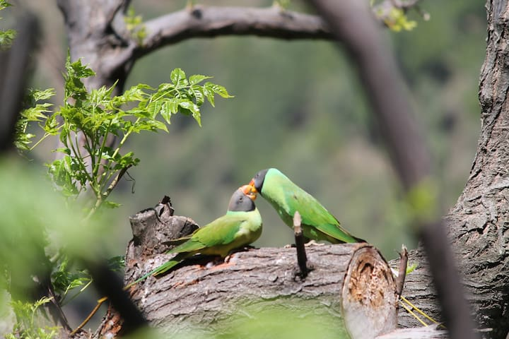 49 Different Birds Species inhabitate and maigratory